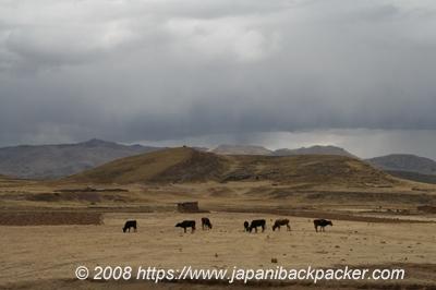 ペールの牧場