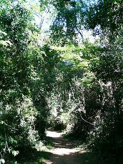 イグアスの滝トレイル
