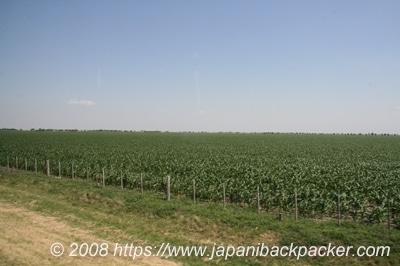 アルゼンチンの畑