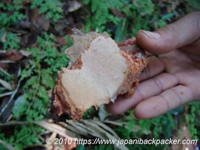 木の皮のハチの巣