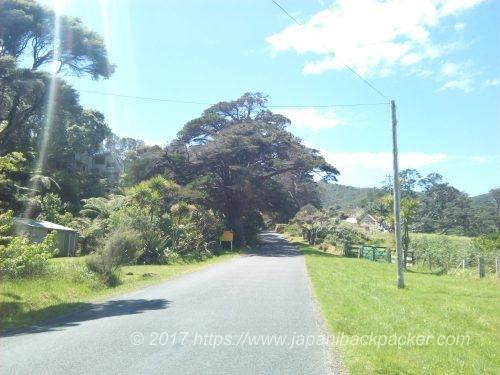 グレートバリア島Medland Road