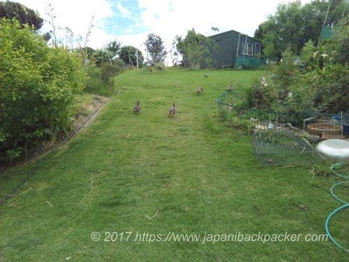 Medlands Beach Backpackersの庭