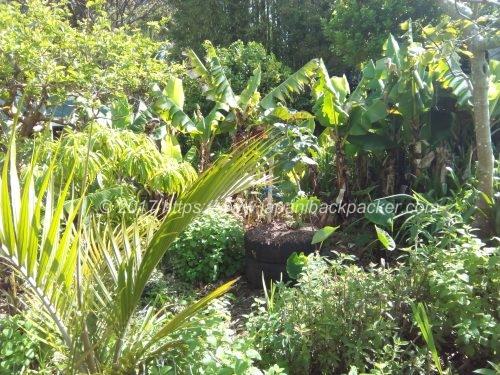 Medlands Beach Backpackers & Villasの庭