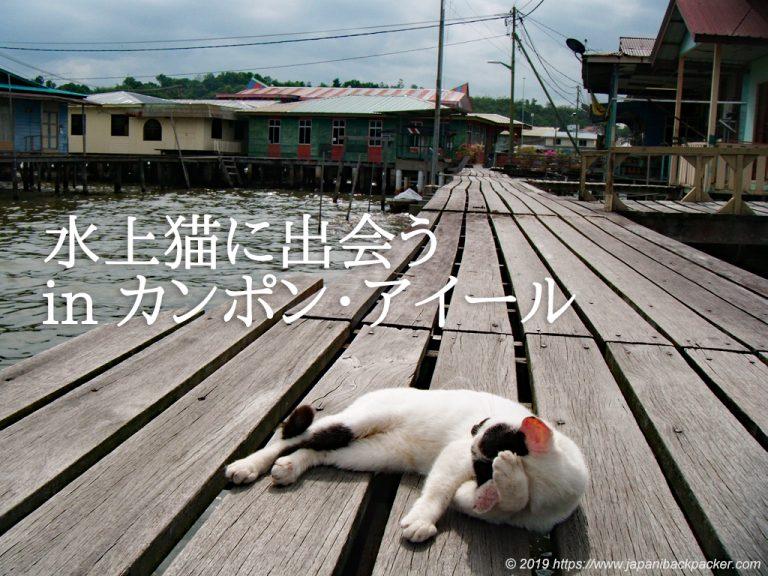 カンポン・アイールの猫