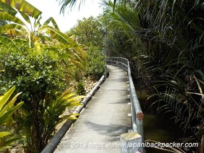 バーンガジャオのジャングル