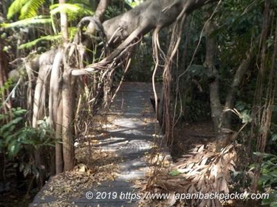木造遊歩道