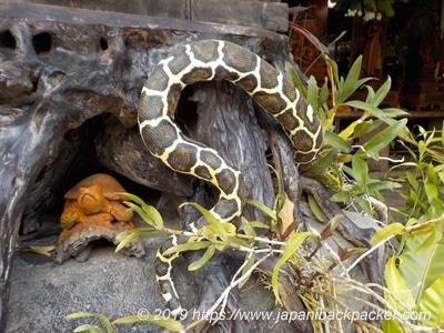 ワット・タウアーイの蛇の置物