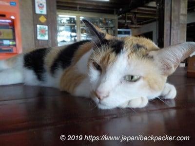 サメット島の猫