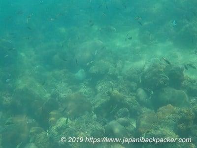 アオパイビーチのサンゴ