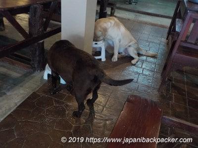 Tubtim Resortの犬