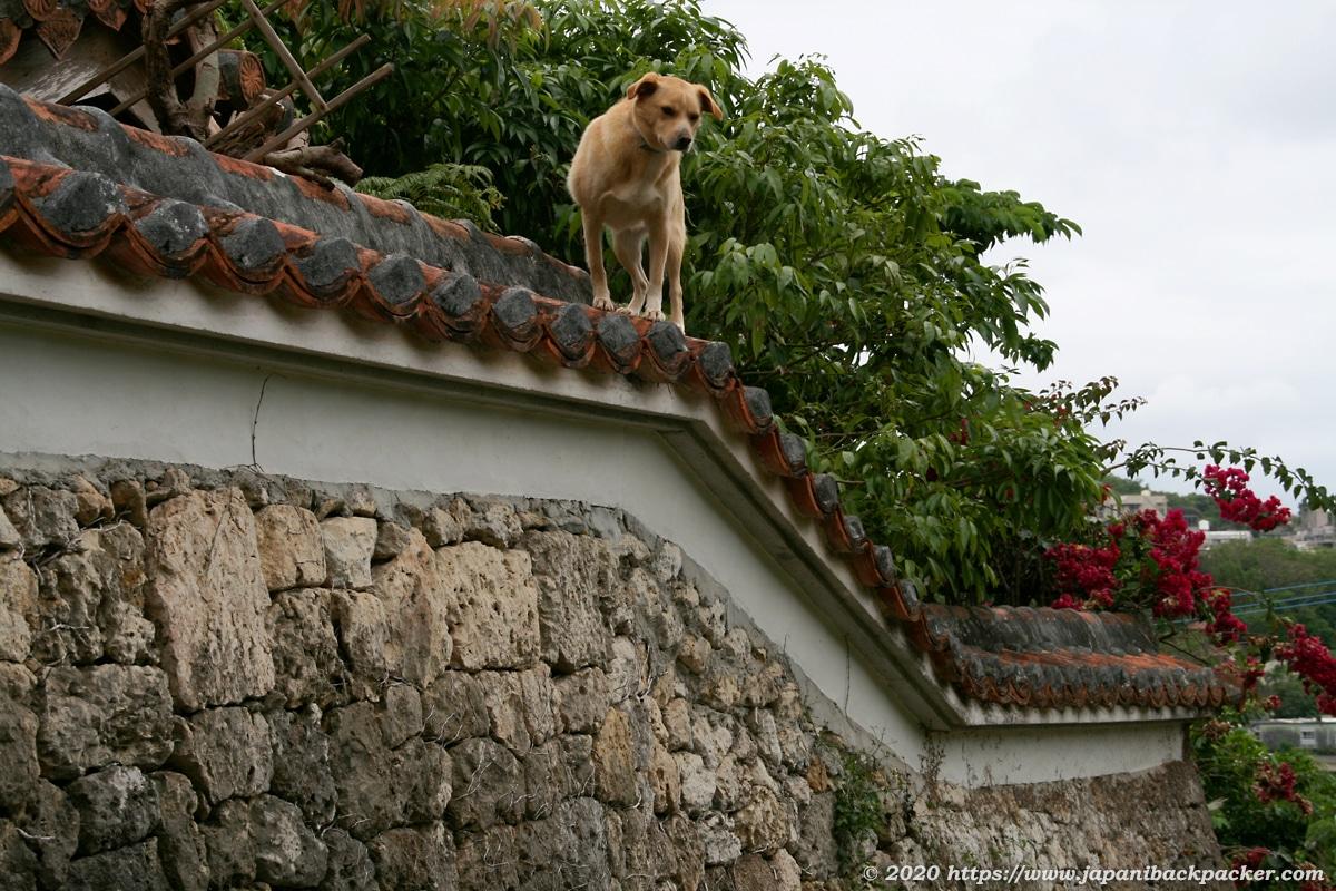 金城町石畳道の犬