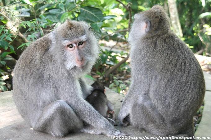 バリ島モンキーフォレストの家族猿