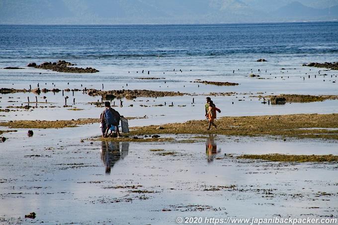 レンボンガン島の海藻採取