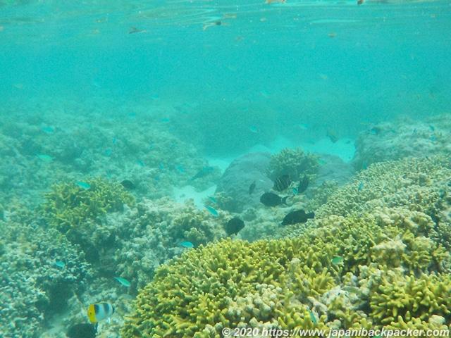 ブラックコーラル島 サンゴの森