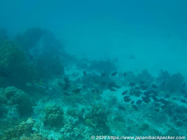 ブラックコーラル島 魚の群れ