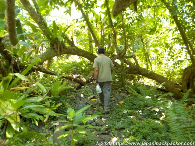 ランガル島のジャングル