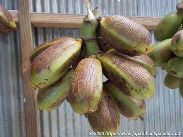 ミクロネシアのカラチバナナ
