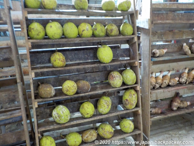 ミクロネシア パンの実