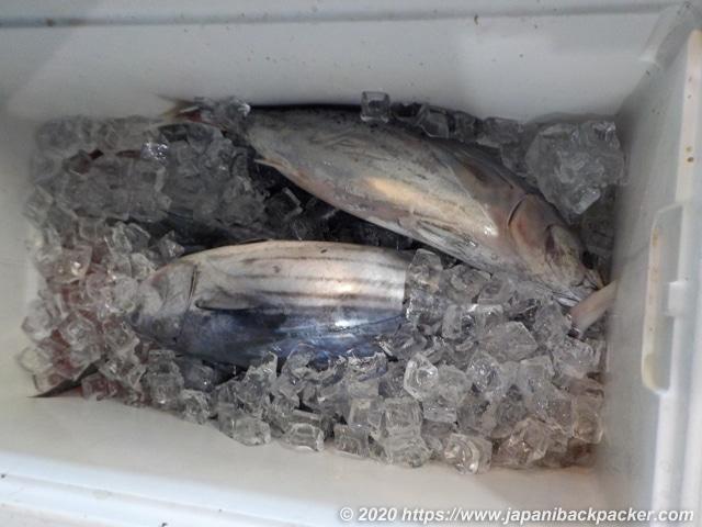 ミクロネシアの魚屋