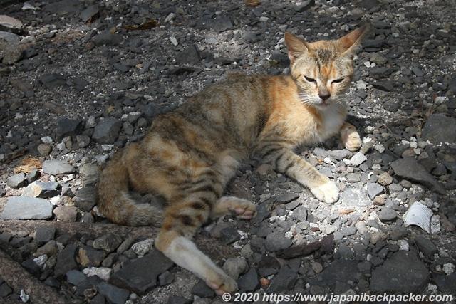 ランガル島の猫