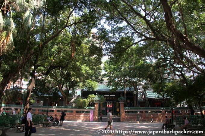 油麻地天后廟 ガジュマルの木