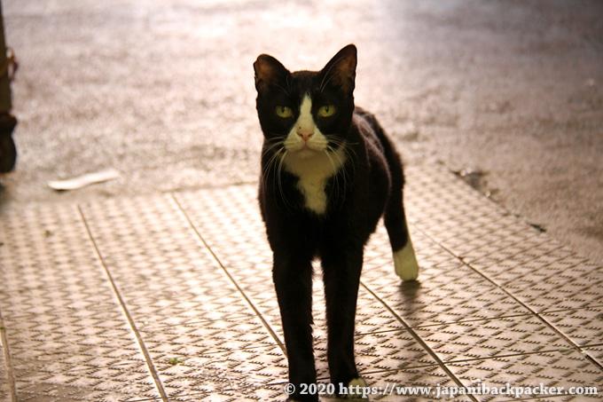 油麻地街市の地域猫