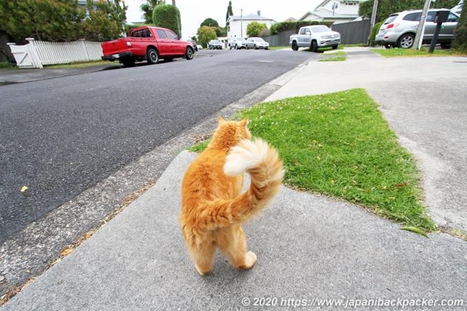 デボンポートの家猫