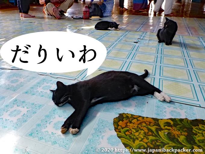 ガーペー僧院の猫