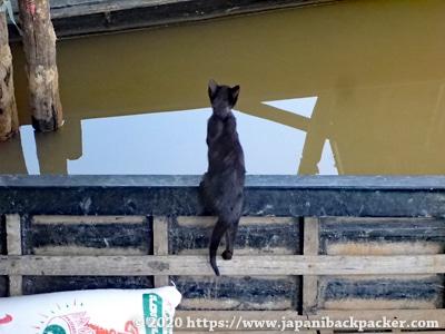 インレー湖の子猫