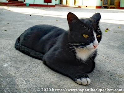 ミャンマーの猫