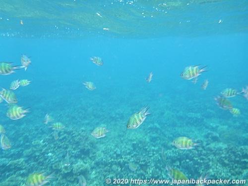 マラパスクア島のコーラルガーデン