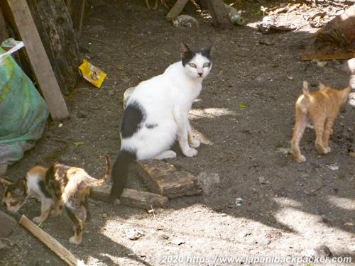 マラパスクア島の猫