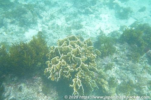 マラパスクア島のサンゴ