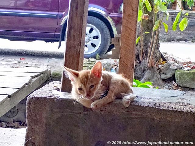 ロンボク島の子猫