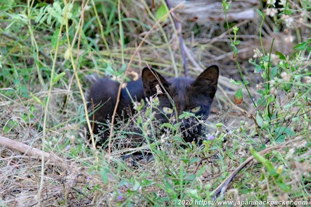 ギリメノ島の黒猫