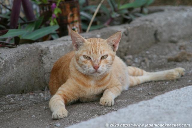 ギリメノ島の猫