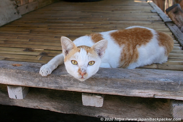 ギリメノ島の家猫