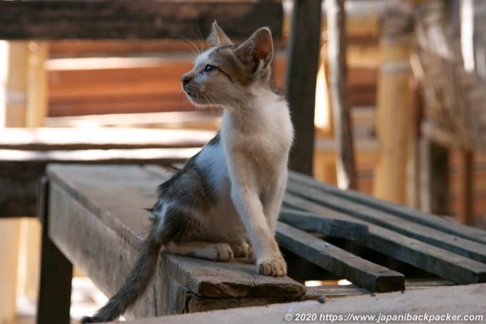 ギリメノ 子猫