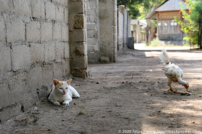 ギリメノの猫と鶏