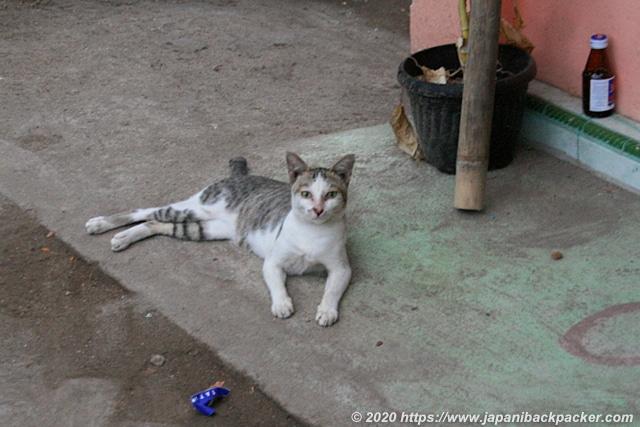 ギリメノの猫