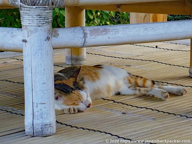 ギリメノ 昼寝する猫
