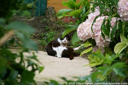 スペイン 猫
