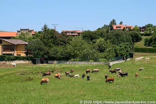 サンティリャーナ・デル・マルの牧場
