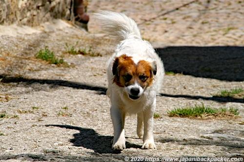 スペインの犬
