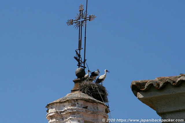 カセレスの旧市街 コウノトリの巣
