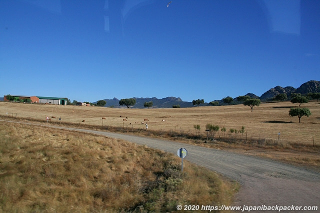 スペイン 牧場