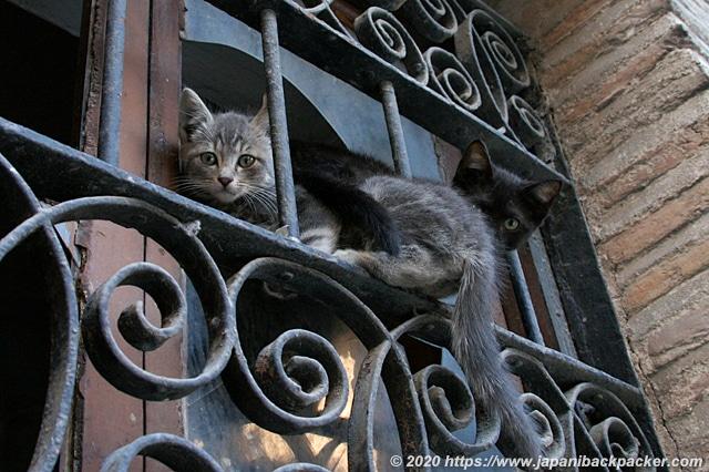 スペイン トレド 子猫