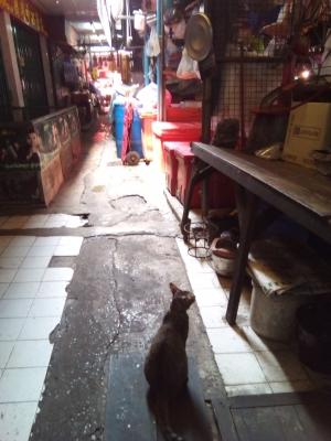クロントゥーイ市場の市場猫